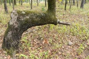 Trail marker tree #1
