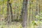 Trail marker tree #4